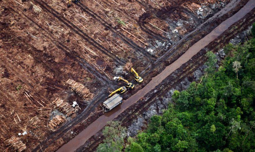 Greenpeace exige una mayor protección de los ecosistemas tras confirmar la OMS el vínculo entre la pérdida de biodiversidad y las enfermedades zoonóticas – ES