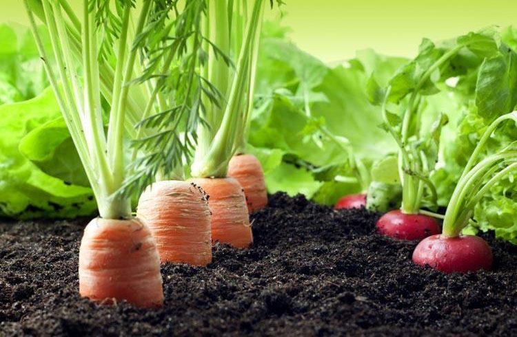 El uso de energías renovables en el mundo agrícola – Blog sobre medio ambiente y ecología