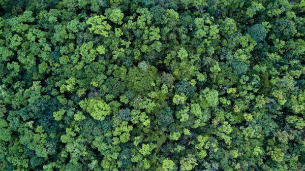 Cuándo es el Día Internacional de los Bosques 2021 y cómo celebrarlo
