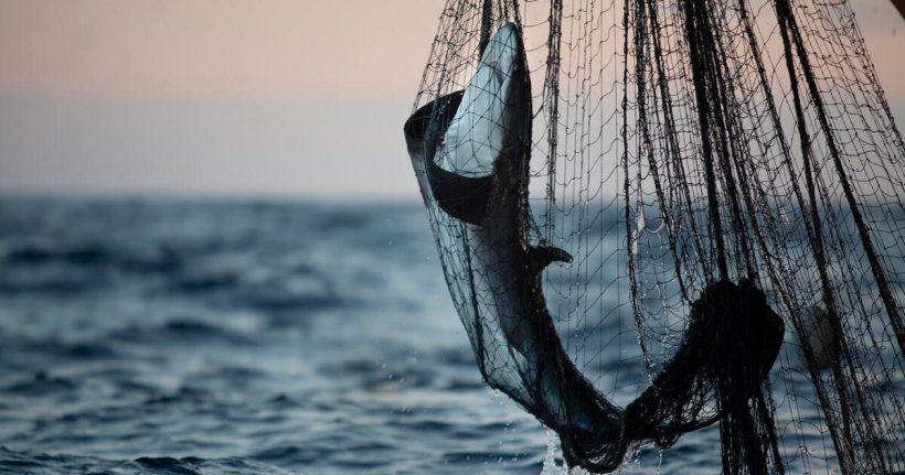Greenpeace encuentra una red ilegal de 33 kilómetros de largo en el Océano Índico – ES