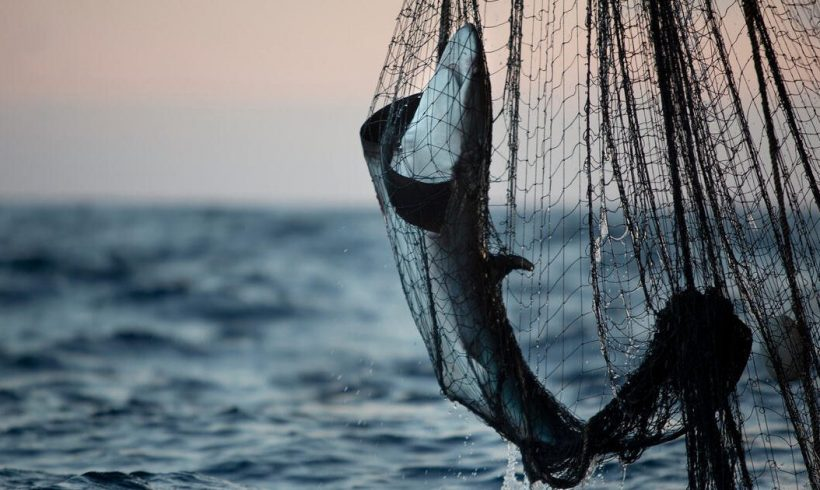 High Stakes: The environmental and social impacts of destructive fishing