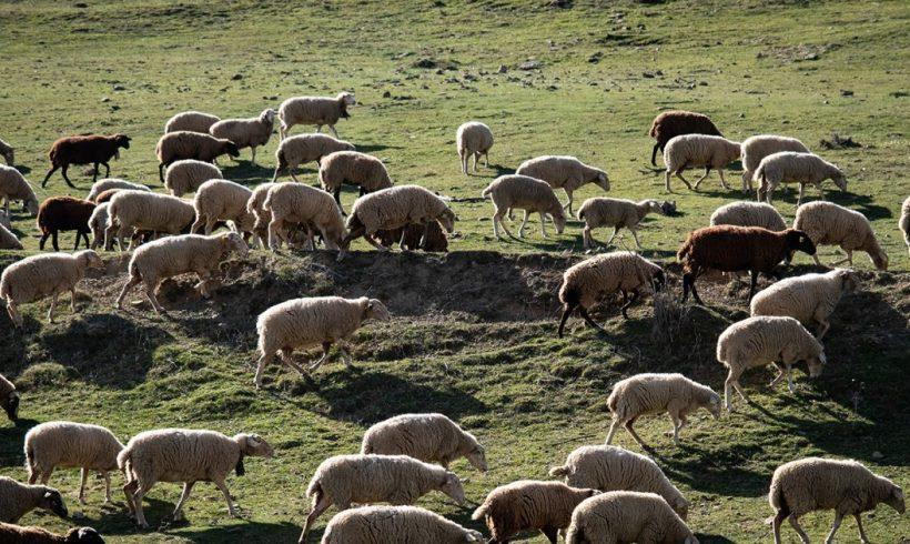 Nuestros pueblos cuidan la biodiversidad – ES