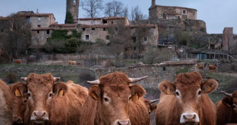 Salvar el planeta desde la España vaciada – ES