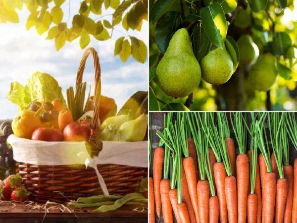 Qué frutas y verduras comer en febrero – Calendario de temporada