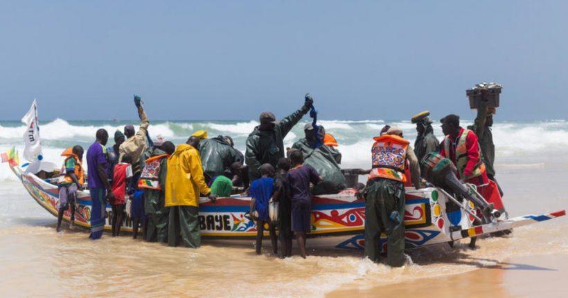 Greenpeace revela el dramático impacto de la industria europea de harinas y aceite de pescado en África occidental – ES