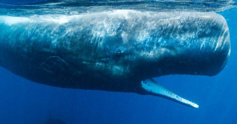 """""""Nuestros océanos están en una espiral mortal"""" – ES"""