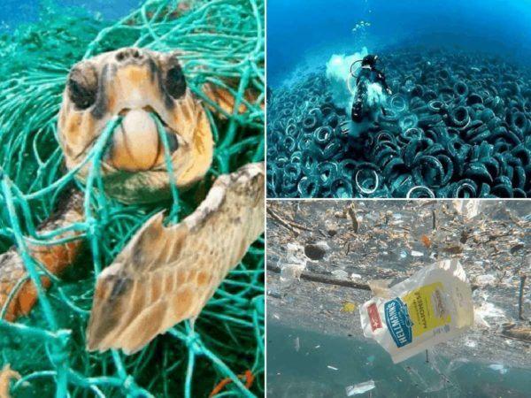 Cuando el mar se contamina