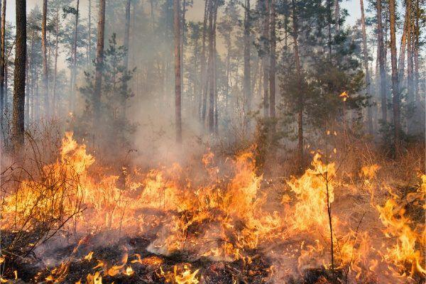 Más incendios en verano: ¿por qué ocurren y qué factores influyen?