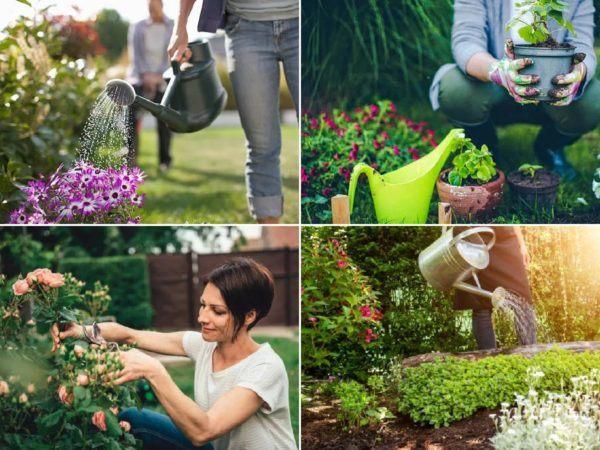¿Cómo puedo desarrollar la resiliencia en mi jardín? Trucos y consejos