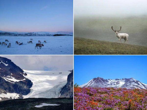 Tundra: Qué es, características, clima, tipos, fauna y flora