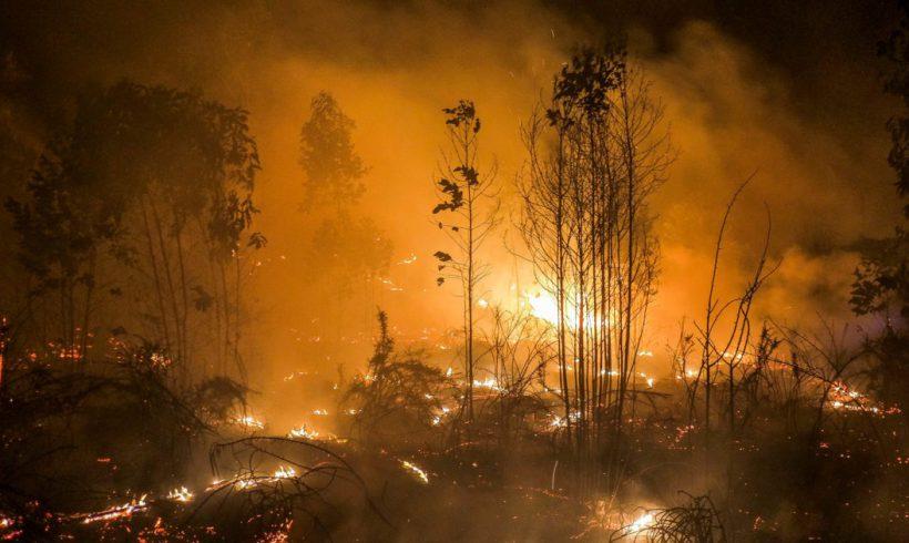 Tenemos la vacuna contra los grandes incendios forestales – ES
