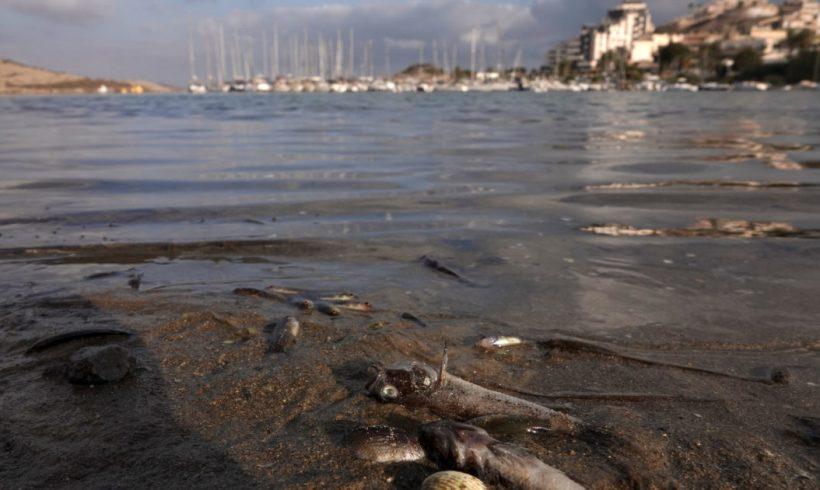 Un informe de Greenpeace señala el trasvase del Tajo-Segura como el origen de la extrema situación que vive el Mar Menor – ES