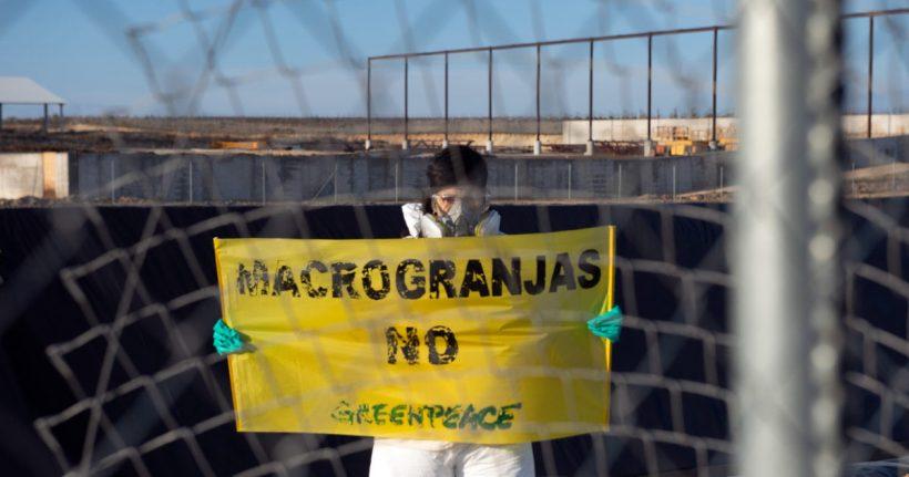 Extremadura va despidiéndose de sus dehesas con cerdos, la mitad ya son de macrogranjas – ES