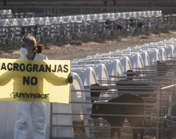 Principales conclusiones y demandas de Greenpeace – ES